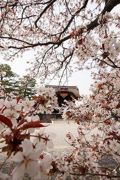 SAKURA in The Kyoto Palace Garden