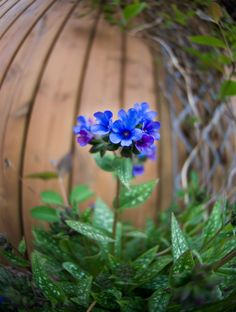 15 HERBS TO GROW IN THE SHADE