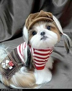 Adorable Puppy  OMG!!! WHAT'S YOUR BREED?? I WANT UUUUUUUUU...SOOOO CUTEEEE!!!!