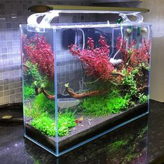Low tech shrimp tank no ferts or by shrimpery Aquarium Store, Nature Aquarium, Home Aquarium, Aquarium Design, Aquarium Ideas, Saltwater Tank, Saltwater Aquarium, Aquarium Fish Tank, Planted Aquarium