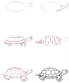 dessiner une tortue