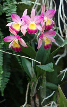 Pink Orchids by CASPER1830.deviantart.com on @deviantART
