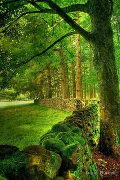 Ancient Stone Fence, Lancashire, England--I know how to make moss grow (other pin). If I ever have land I am making a stone fence and covering it in moss! Foto Nature, All Nature, Beautiful World, Beautiful Places, Stone Fence, Concrete Fence, Bamboo Fence, Metal Fence, English Countryside