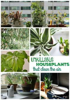 If you're looking for unkillable houseplants that clean the air, try a few of these