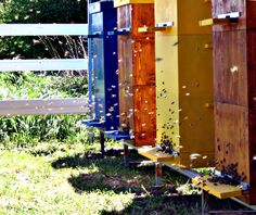 PerfectBee's unique plan towards your first beehive, takes you from beekeeping basics to enjoying your own honey from your backyard beehive