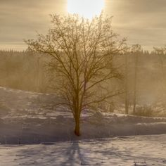 Snowball Affinity Photo, Nature View, Image Types, Snowball, Dog Walking, Mists, Weather, Outdoors, Outdoor Rooms