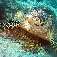 i love turtals and i have always wanted to go to hawii and go scuba diving