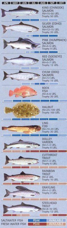 Ketchikan Fishing Calendar - Ketchikan, Alaska www. Alaska Fishing, Fly Fishing Tips, Fishing Quotes, Sport Fishing, Fishing Girls, Best Fishing, Kayak Fishing, Alaska Hunting, Fishing Cart