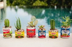 so cute! little cacti in little tin cans