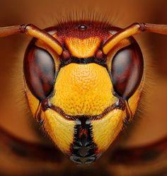 Macro bug face. Yummy.