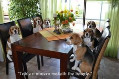 Dinner at the royal beagle family home