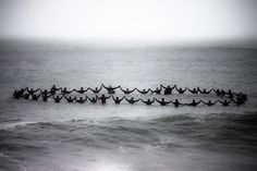 collection (surfers)    #tcolla