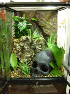 Except for the rock substrate a nice setup Vivarium designed for Bumblebee Arrow Frogs