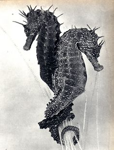 Seahorses are truly unique, they are monogamous and mate for life. Rarer still, they are among the only animal species on Earth in which the male bears the unborn young~♛