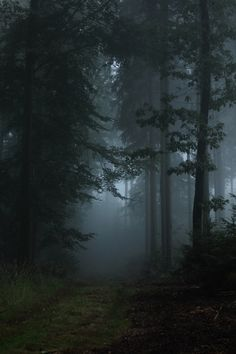 Dark moody misty forest