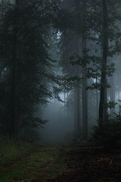 Dark moody misty forest