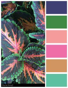 Fern Color Scheme. #colorscheme, #fern, #ferncolorscheme, #flower