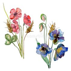 Wildflower bouquet floral botanical flowers. Watercolor background set. Isolated wildflower illustration element.. Illustration about orange, decoration, drawn, phlox - 141851240 Botanical Flowers, Watercolor Background, Wild Flowers, Bouquet, Draw, Ornaments, Orange, Decoration, Illustration