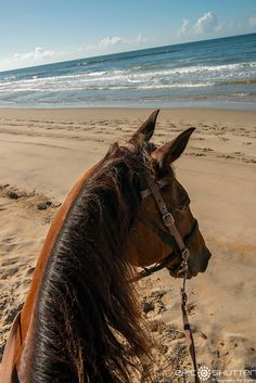 Outer Banks Equine Adventures, Horseback Riding through the Maritime Forest of Frisco and on the Beach Cute Horses, Pretty Horses, Horse Love, Beautiful Horses, Animals And Pets, Funny Animals, Cute Animals, Trail Riding, Horse Riding