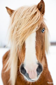 The TOP 13 Gemma Clarke Photography Highlights for 2013 Icelandic Horse, Chapel Wedding, Ponies, Highlights, Pets, Top, Photography, Animals, Beautiful