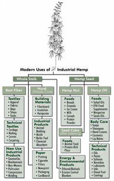 Modern Uses of Industrial Hemp  Hemp is not a Drug