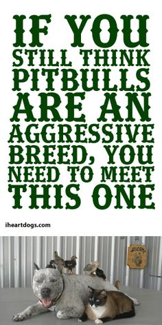 If You Think PitBulls Are An Aggressive Breed, You Need To Meet This One!