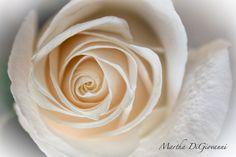 Soft Swirl