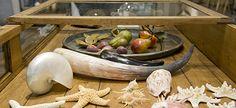 Sea Shells, Serving Bowls, Tableware, Kitchen, Baking Center, Dinnerware, Cooking, Clams, Bowls