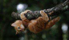 cats #cat #katten #kat