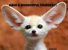 Have a wonderful Thursday! via Living Life at www.Facebook.com/KimmberlyFox.39