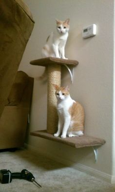 DIY Wall Mounted Cat Tree - great way to minimize floor space used