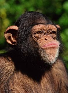 Shall I describe in detail all the exact reasons why that's true? Animals And Pets, Baby Animals, Funny Animals, Cute Animals, Primates, Mammals, Types Of Monkeys, Monkey Art, Tier Fotos