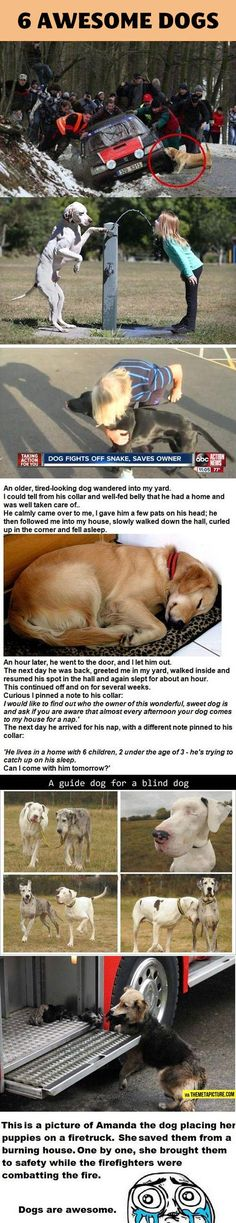 Why I love dogs so much.