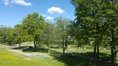 Der Motherwell-Park in Schweinfurt in voller Blüte - http://www.schweinfurt360.de/  #Park #Motherwell #Blüte
