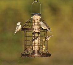 Woodlink Caged Feeder:  Attract chickadees, finches, juncos, kinglets, redpolls, sparrows, woodpeckers, and more. Squirrels are unable to reach past the locked lid; lift to clean or refill. Tube includes four drainage holes to aerate seed.