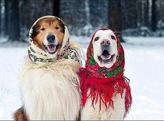 Babushka Doggos All Wrapped Up Pics) - World's largest collection of cat memes and other animals All Dogs, I Love Dogs, Puppy Love, Dogs And Puppies, Doggies, All Gods Creatures, Mans Best Friend, Pet Birds, Funny Dogs