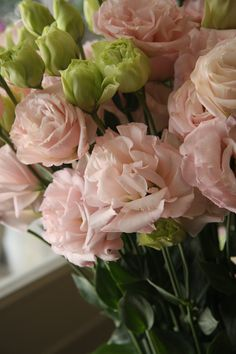 eustoma First love