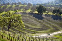 Here is a guide to visiting Paso Robles includes why you should go, when to go, what to do, where to eat and where to sleep