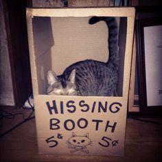 Bad cat gets job.