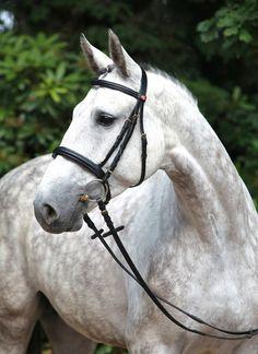 Zafrina, a Holsteiner mare. German Horse Center.