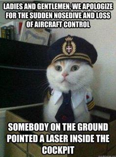 Airplane captain cat