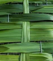 Woven Australian Gymea leaves - these reach over 2m in length! #floristrycompetition #floralart #longleaves