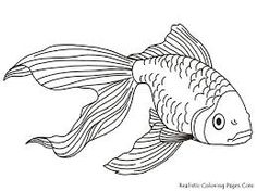 Image result for simple image of bright fish to draw