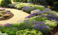 Edible Landscaping: Herb Garden | jardin d'herbes aromatiques