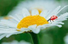Ladybug ❤️