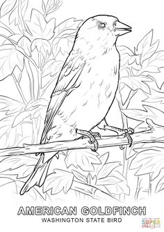 Washington State Bird Coloring Page 1020x1440