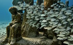 Jason deCaires Taylor anchors his sculptures on the ocean floor, where they get colonized by seaweed, algae and coral, turning them into living reefs. Description from pinterest.com. I searched for this on bing.com/images