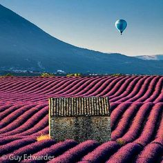 Another shot from the lavender fields in Provence. This time a hot air balloon rises above the distant hills just after sunrise.  #landscapephotography #outdoorphotographer #outdoorphotography #landscape #natgeocreative #natgeolandscape #natgeotravel #geo #earthpix #earthfocus #canon #canonuk #greatshots #earthofficial #provence #france #lavender #photographyworkshops #frenchlavender #valensole #France #hotairballoon #ballooning #wanderlust #travelphotography