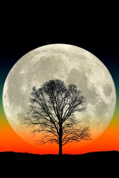 A full moon rises behind the silhouette of a lone tree in this composite photo.