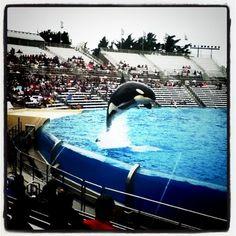 Sea World San Diego! Captivity of orcas makes me sad.